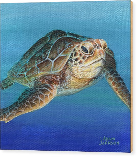 Sea Turtle 1 Of 3 Wood Print