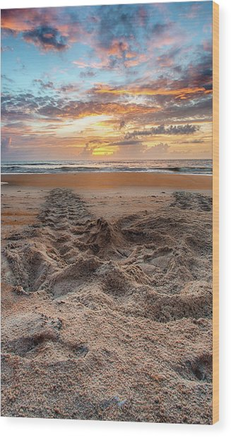 Sea Turtle Trails Wood Print