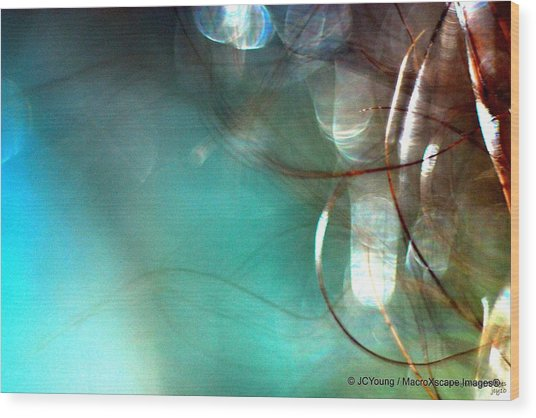 Sea World Wood Print by JCYoung MacroXscape