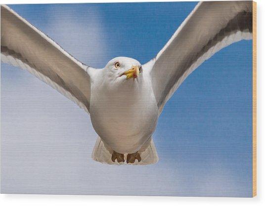 Seabird Closeup Wood Print