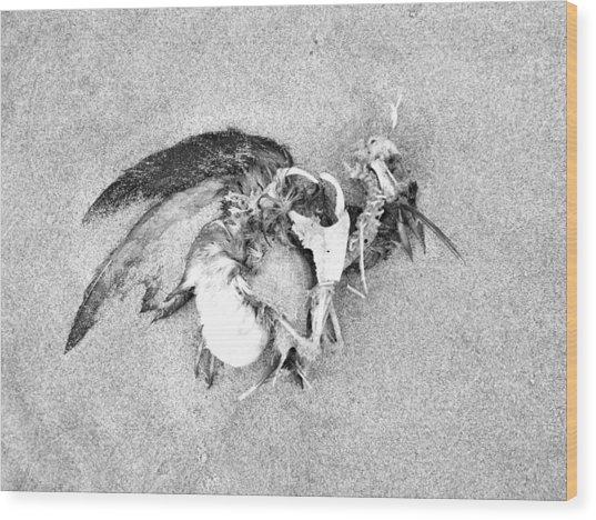 Seabird Fatalities-1 Wood Print