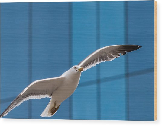 Seabird Flying On The Glass Building Background Wood Print