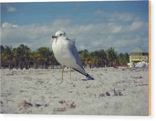 Seabird Wood Print by JAMART Photography