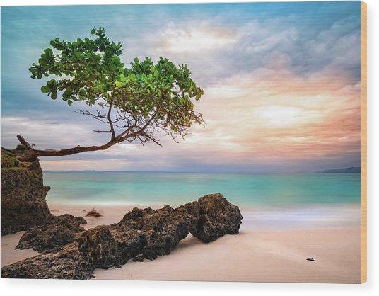 Seagrape Tree Wood Print