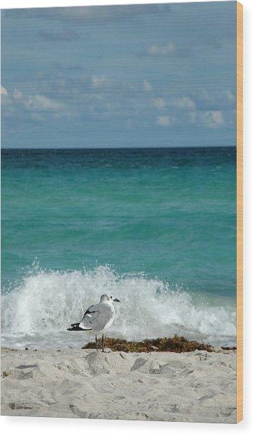 Seagull - South Beach Miami Wood Print