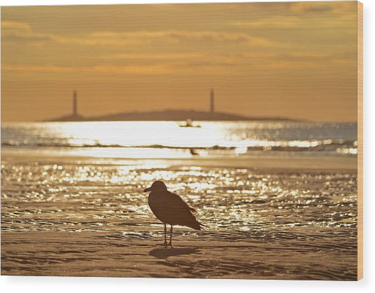 Seagull Admiring Thacher Island Gloucester Ma Good Harbor Beach Wood Print
