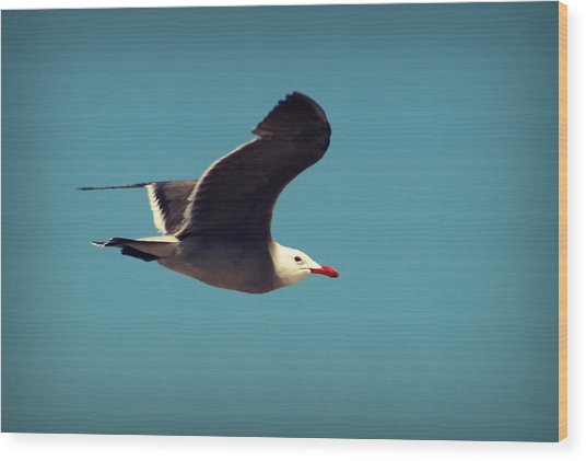 Seagull Aflight Wood Print