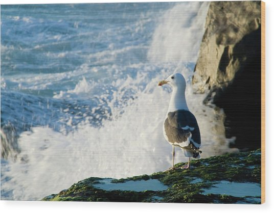Seagull And The Sea Wood Print