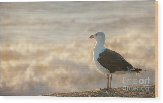 Seagull At Sunrise Wood Print