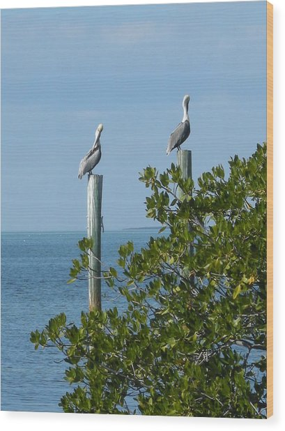 Seagull Wood Print by Audrey Venute