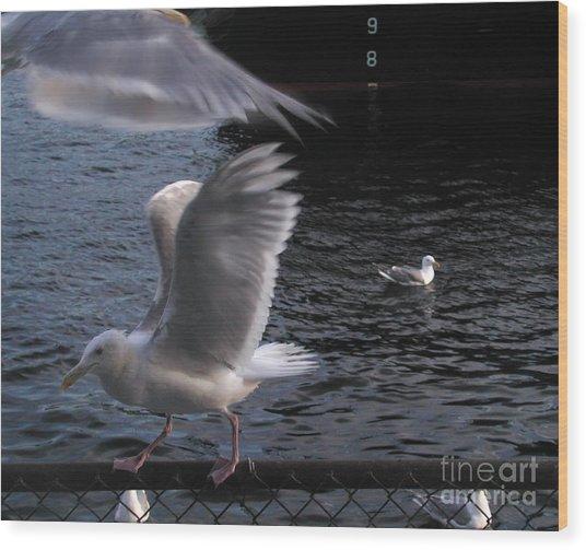 Seagull Circus Wood Print