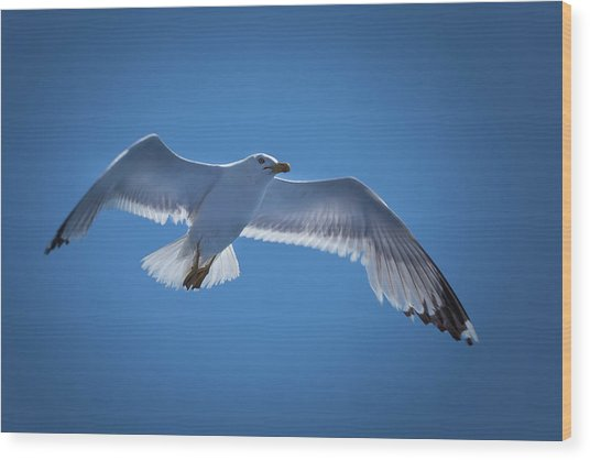 Wood Print featuring the photograph Seagull by Davor Zerjav