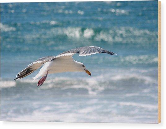 Seagull Flight Wood Print by Stormshade Designs