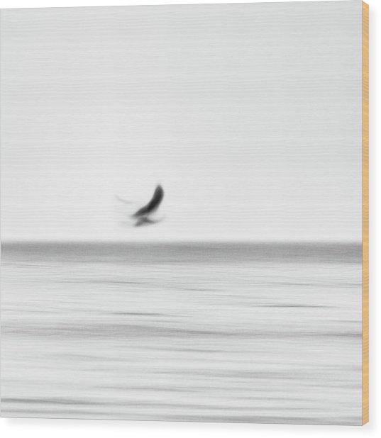 Seagull Wood Print by Holger Nimtz