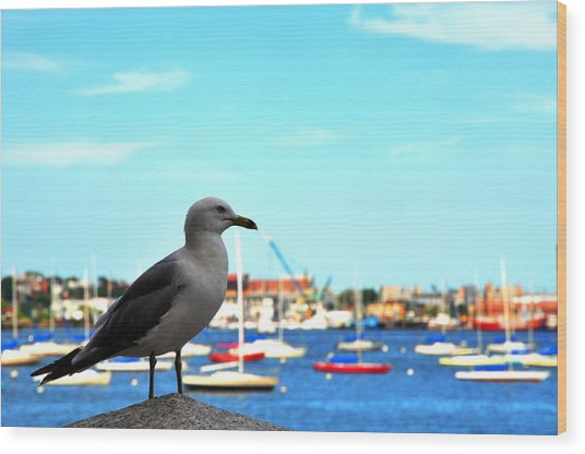 Seagull In Boston Harbor Wood Print by Andrew Dinh