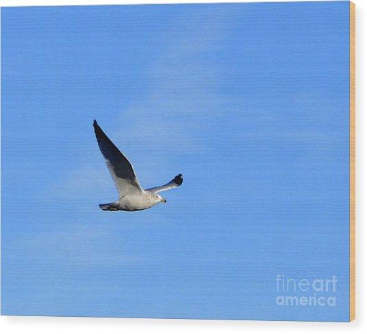 Seagull In Flight Wood Print