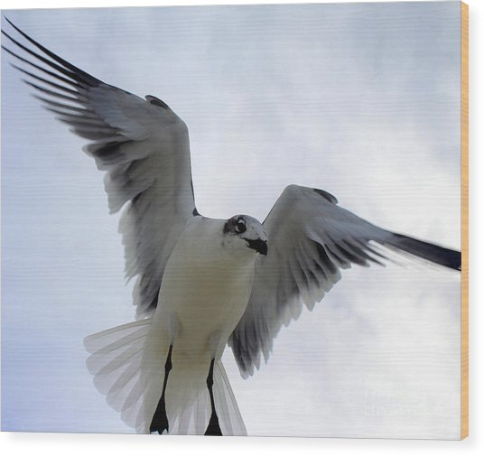Seagull In Flight I Wood Print