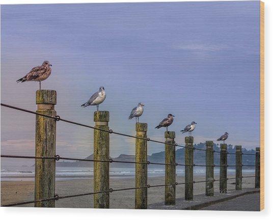 Seagull Lineup Wood Print