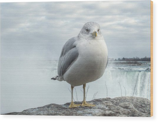 Seagull Model Wood Print