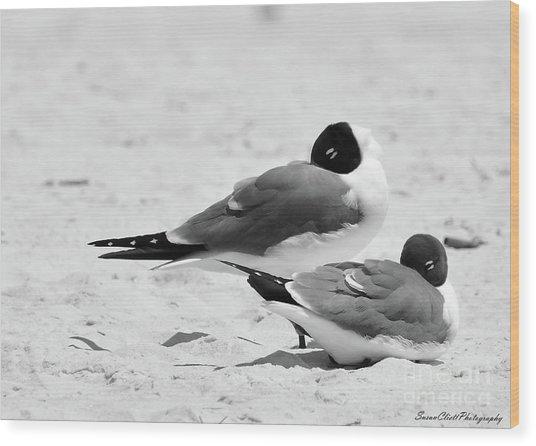 Seagull Nap Time Wood Print