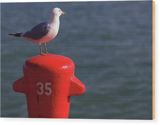 Seagull Number 35 Wood Print