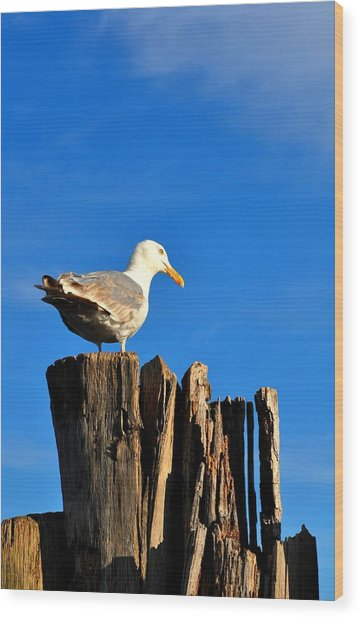 Seagull On A Dock 2 Wood Print by Andrew Dinh