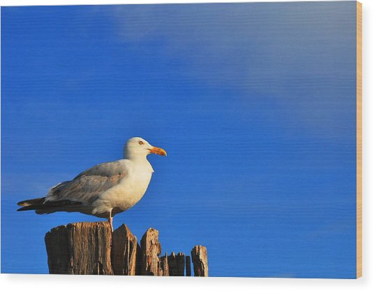 Seagull On A Dock Wood Print by Andrew Dinh