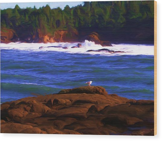 Seagull On Rock Wood Print by Shelley Bain
