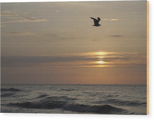 Seagull Over Atlantic Ocean At Sunrise Wood Print by Darrell Young