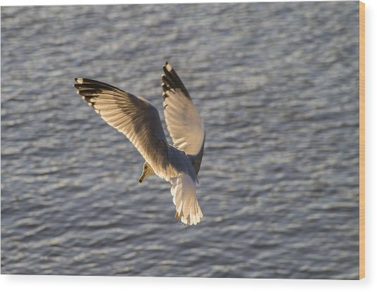 Seagull Over Cape Fear River Wood Print