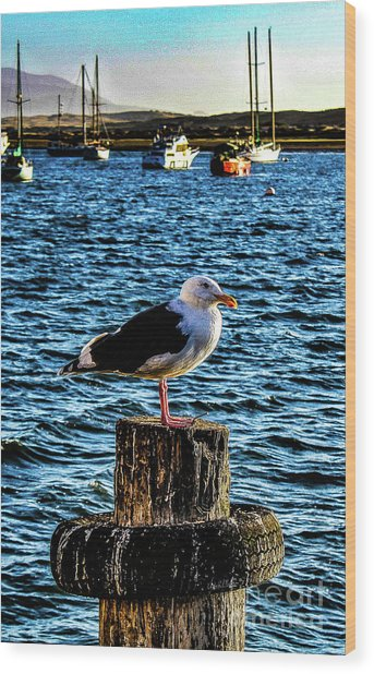 Seagull Perch Wood Print