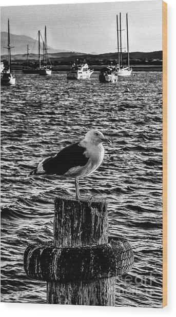 Seagull Perch, Black And White Wood Print