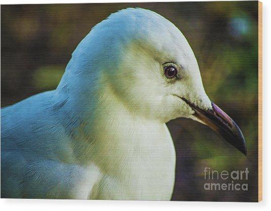 Seagull Portrait 1  Wood Print