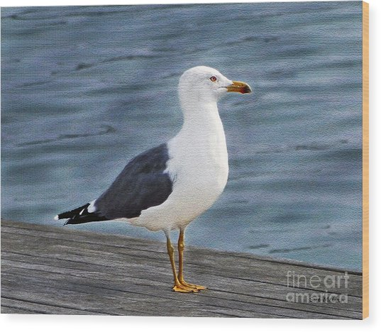 Seagull Portrait Wood Print