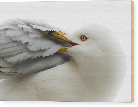Seagull Pruning His Feathers Wood Print