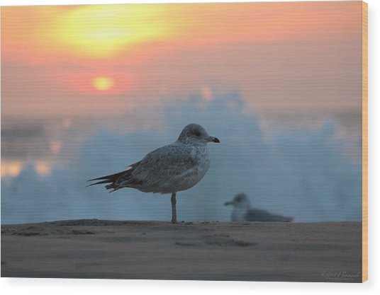 Seagull Seascape Sunrise Wood Print