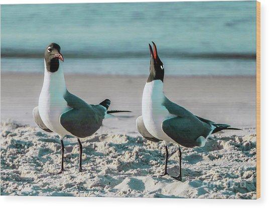 Seagull Serenade 4954 Wood Print