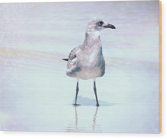 Seagull Stance Wood Print by JAMART Photography