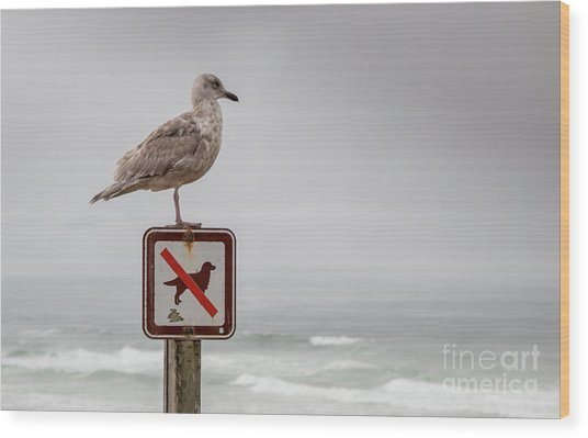 Seagull Standing On Sign And Looking At The Ocean Wood Print