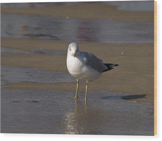 Seagull Standing Wood Print