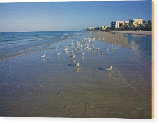 Seagulls And Terns On The Beach In Naples, Fl Wood Print