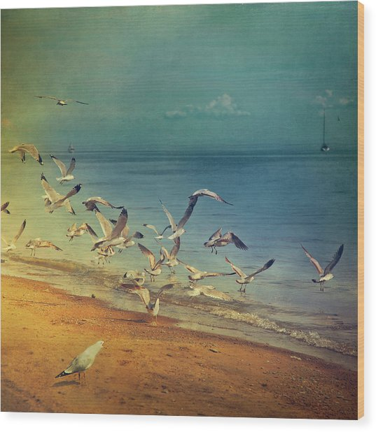 Seagulls Flying Wood Print