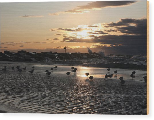 Seagulls In The Surf At Sunset Wood Print by Christopher Purcell