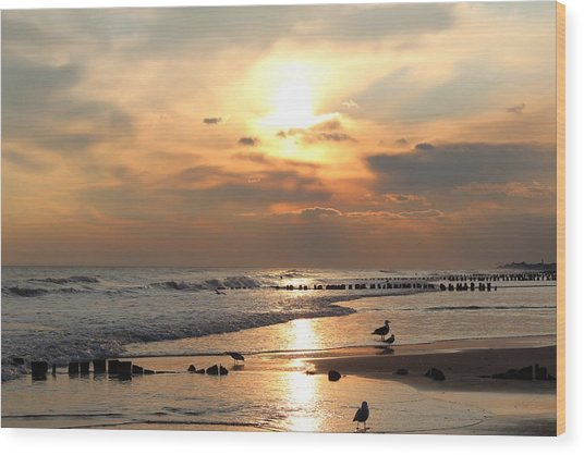 Seagulls On Beach Wood Print