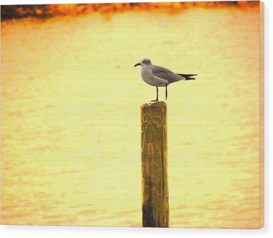 Seagulls Sunset Wood Print