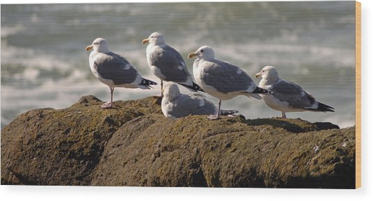 Seaguls Wood Print by Curtis Gibson