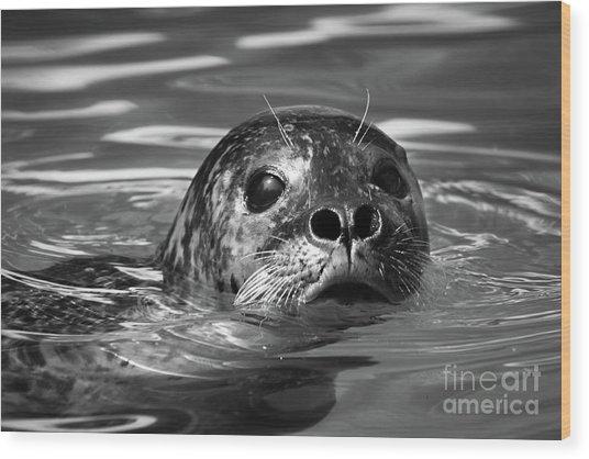 Seal In Water Wood Print