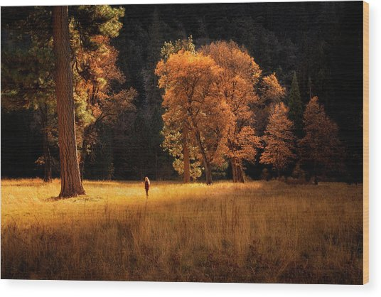 Searching For Light Wood Print