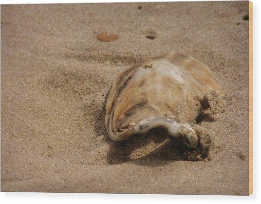Seashells At The Seashore Wood Print by JAMART Photography