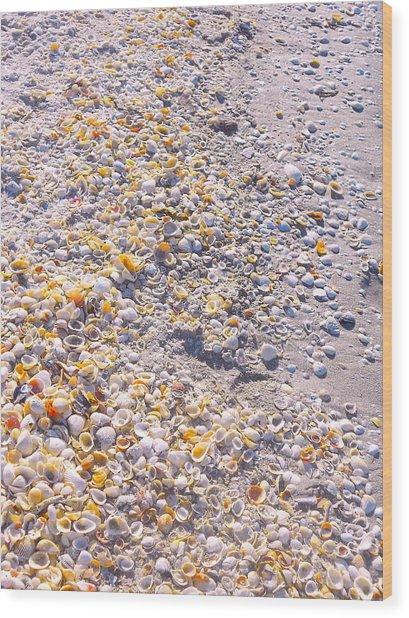 Seashells In Sanibel Island, Florida Wood Print